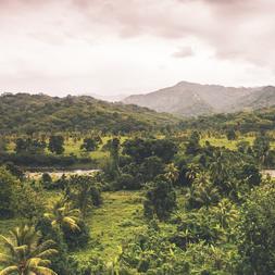 100 % Jamaican Blue Mountain Fresh Dark Roasted Whole Coffee