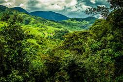 Panama Geisha Reserve Coffee Beans FRESH ROASTED DAILY 5 /1