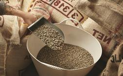 Green Coffee Beans Whole Unroasted Brazilian Natural Bulk 10