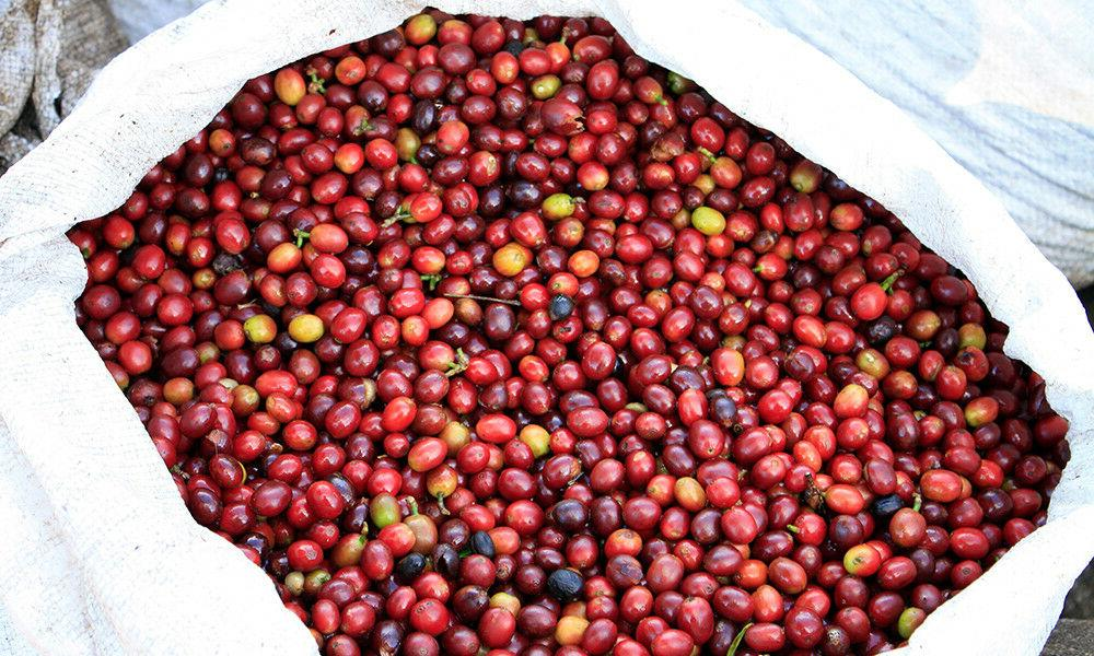 Mocha Java Beans Roasted 2 1 Pound Bags