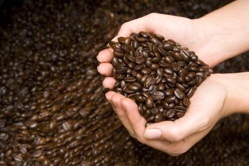 100% Coffee Whole Beans Medium Roasted
