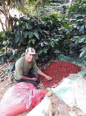 Specialty Coffee Beans Kafetos