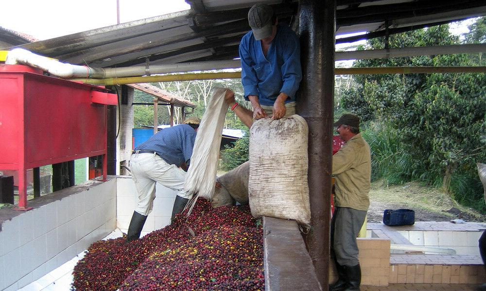 Colombian Whole Coffee Beans Medium Roasted Daily 5