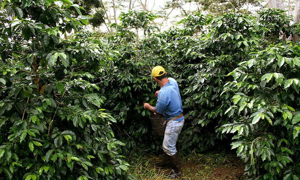 Colombian Supermo Coffee Beans Roasted 5 1LBS