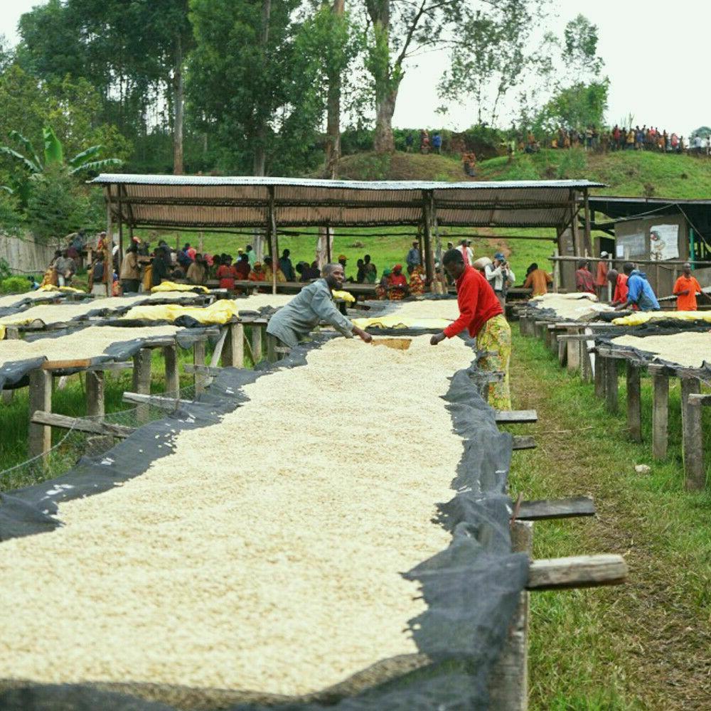 Mocha Java Beans Fresh Roasted 2 Bags