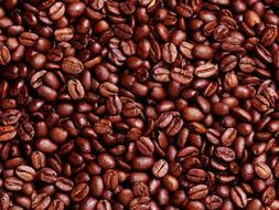 Lavanta Coffee Decaf Brazil Arabica Green or Roasted Coffee