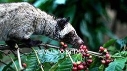 King of Coffee Wild Kopi Luwak Coffee Beans 100g